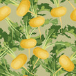 seamless background with yellow vegetable turnips