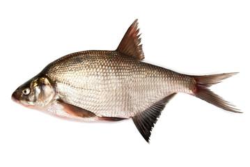 Fresh bream fish on a white background