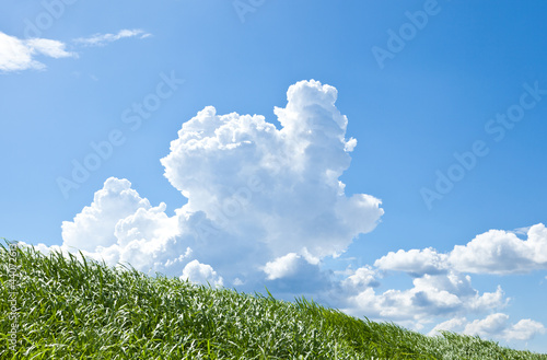 Grass and summer thunderhead