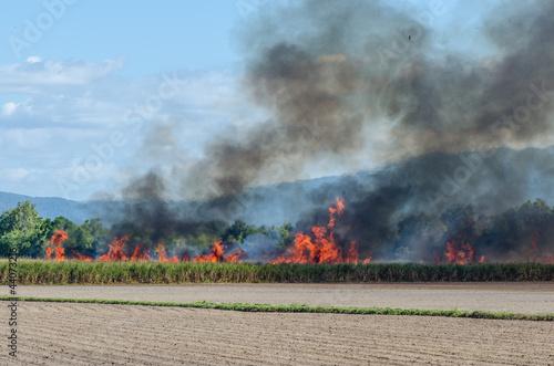 サトウキビ畑で焼畑