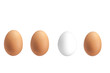 Drei braune Eier und ein weißes Ei