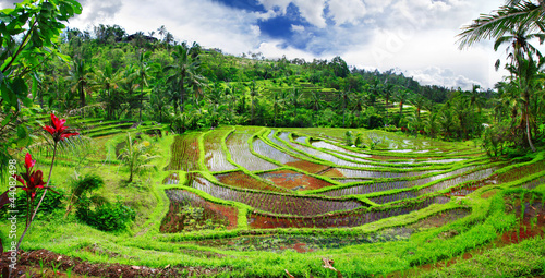 beautiful rice teracces - Bali