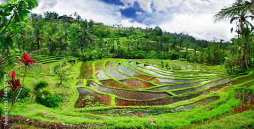 Foto op Plexiglas Indonesië beautiful rice teracces - Bali