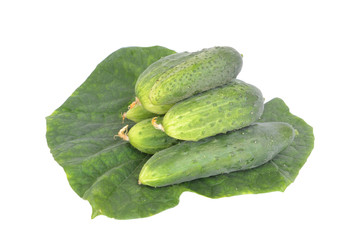 Fresh cucumber with leaf isolated on white