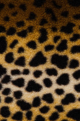 Pattern of a tiger skin