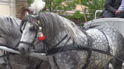 Beautiful pair of horses
