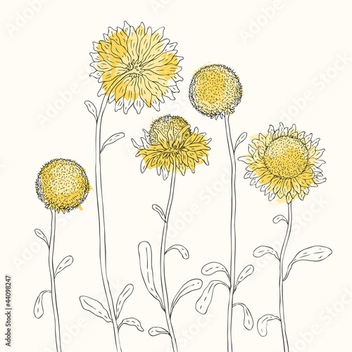 Tuinposter Abstract bloemen Yellow sunflowers on white background. Vector illustration