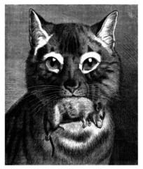 Hunt : Cat & Mouse