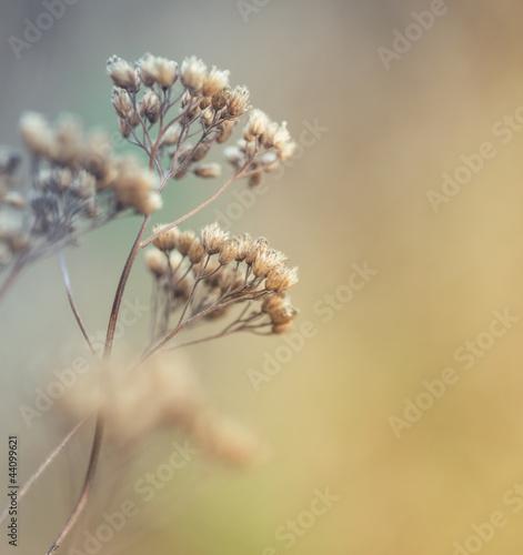 zblizenie-suche-laki-kwiaty