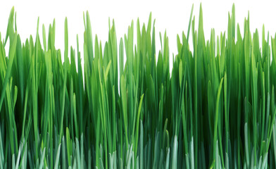 Green Grass Seamless Tile Tiling Repeating Isolated