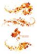 Autumn leaves design elements - 44100074