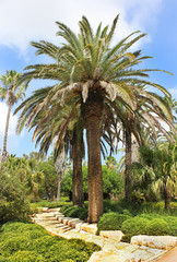 palm grove in the Park Ramat Hanadiv, Israel