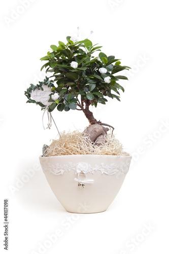 bonsai baum hochzeit geschenk stockfotos und lizenzfreie bilder auf bild 44107098. Black Bedroom Furniture Sets. Home Design Ideas