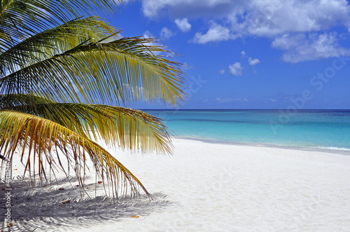 Caribbean beach.