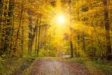 Fototapety Sonne im Herbstwald, schwäbische Alb