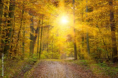 Fototapeta Sonne im Herbstwald, Schwäbische Alb