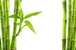 Fototapeten,bambus,grün,natürlich,pflanze
