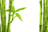 bamboo background © oly5