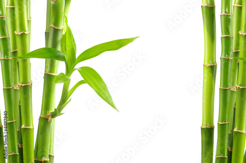 Leinwanddruck Bild bamboo background