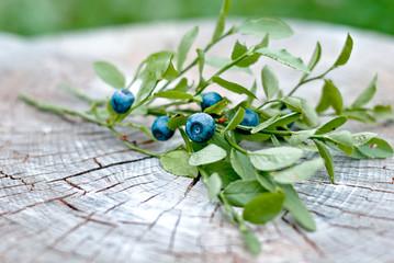 fresh blueberry
