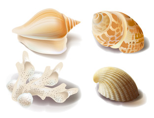 set of seashells and coral