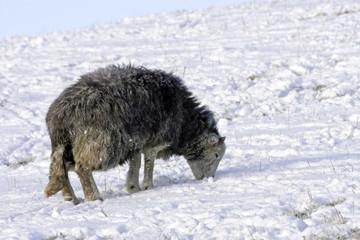 Harsh Winter