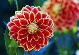 Fototapeta Große rot weiße Blüte