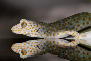 ein Gecko geht baden