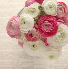pink and white ranunculus with script