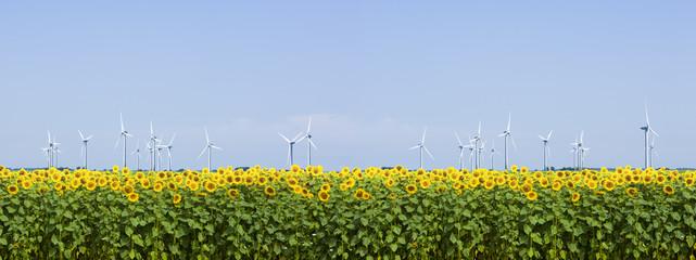 Windräder und Sonnenblumenfeld