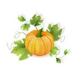 Orange pumpkin vegetable with green leaves