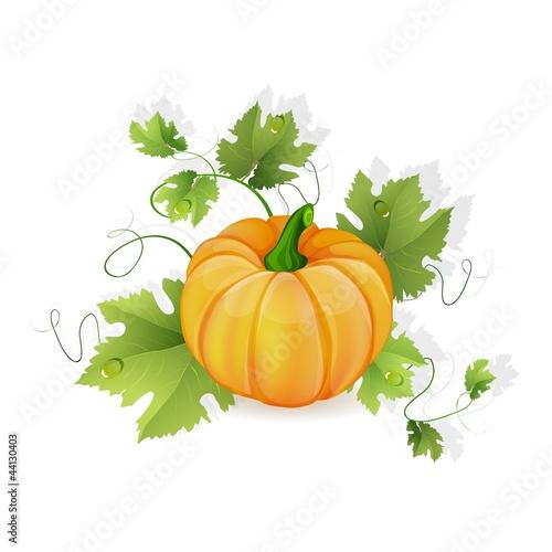 Orange pumpkin vegetable with green leaves
