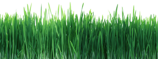 Green Grass Panorama Seamless Tile Tiling Repeating Isolated