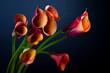 Bouquet of Orange Calla lily over black background