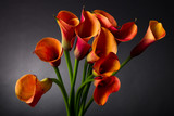 Fototapety Orange Calla lily (Zantedeschia aethiopica) over black