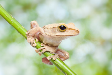 Frog on green bokeh background