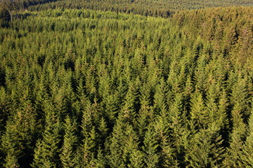 Fernblick über den Arnsberger Wald Sauerland NRW Deutschland