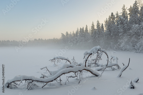 The tree which has fallen and frozen in winter lake © v3