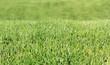 Rasen Nahaufnahme