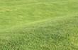 Rasen gewellt