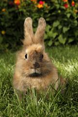 Rabbit baby bunny in green grass meadow