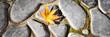 Ahornblatt auf dem Boden