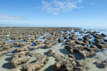 Stromalotites World Heritage Australia