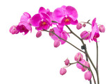 Fototapety orchid flowers