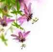 Fototapeten,passiflora,tropisch,blume,blume