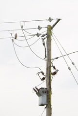 Power lines and transfomer on pole