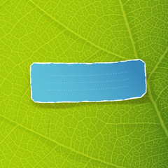 Green leaf texture and torn label with space for text. EPS10