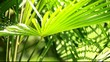 Green and bright palm leaves in the wind