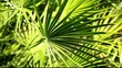 Green and bright palm leaves on blured background