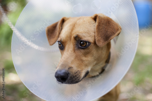 sad pet suffering in cone